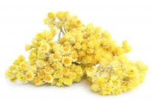 Tiny yet powerful, little, yellow flowers of helichrysum.